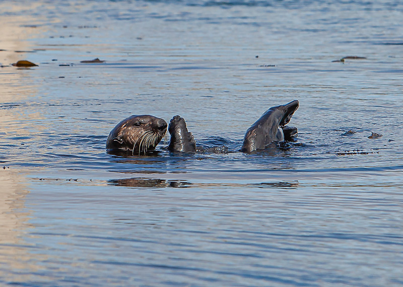 Morrow Bay Otters and AG Roosters-31.jpg
