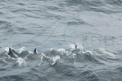 2014-08-17-Montauk-Whale Watch