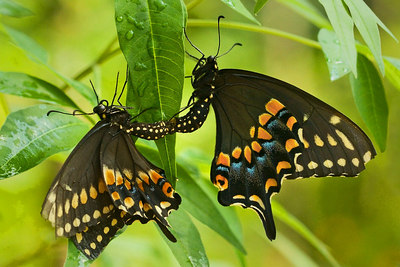 Butterfly Life Cycle photos