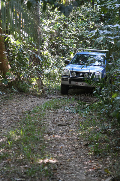 The track leading to the start of the Devils Thumb walking track in Mossman.