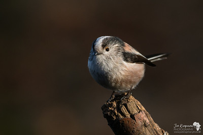 Scottish Birds January - March 2017