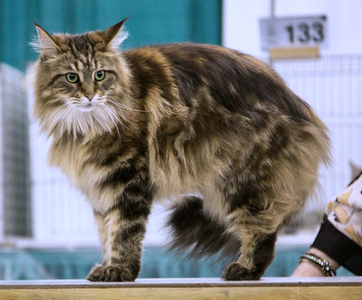 CatShow2014019.JPG