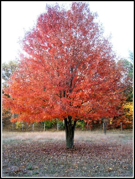 fall (10).jpg