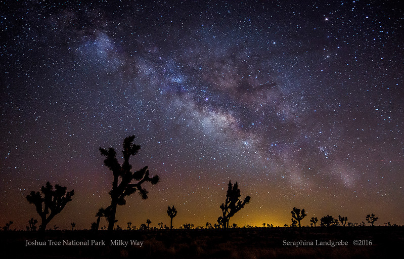 _DSC5975Milky Way Joshua trees.jpg