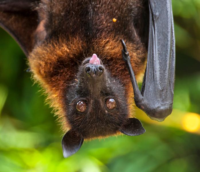 Bali Bats-2.jpg