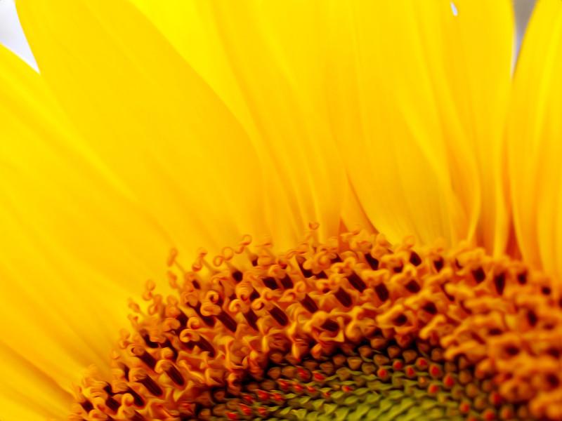 sunflowersectionpaint.jpg