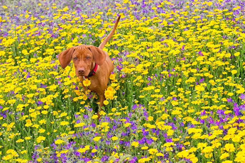 Dogs_Bosca_Cornwall_2014_FH0T7847.jpg