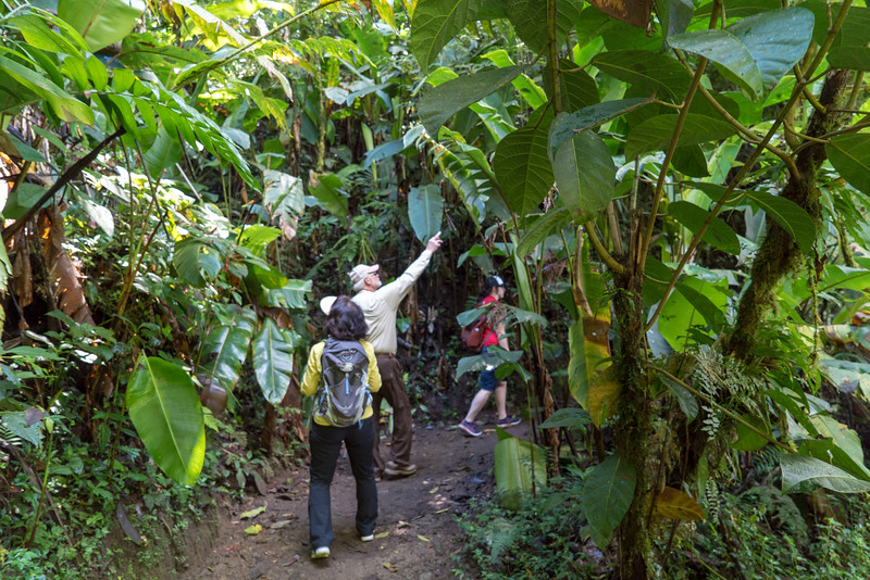 Costa Rica 2015-4128.jpg