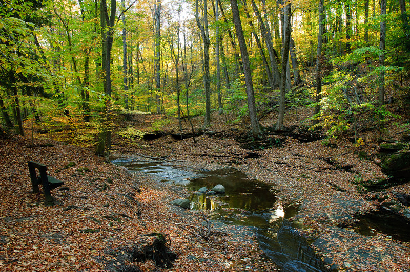 20081023_south_chagrin_reservation_046.jpg