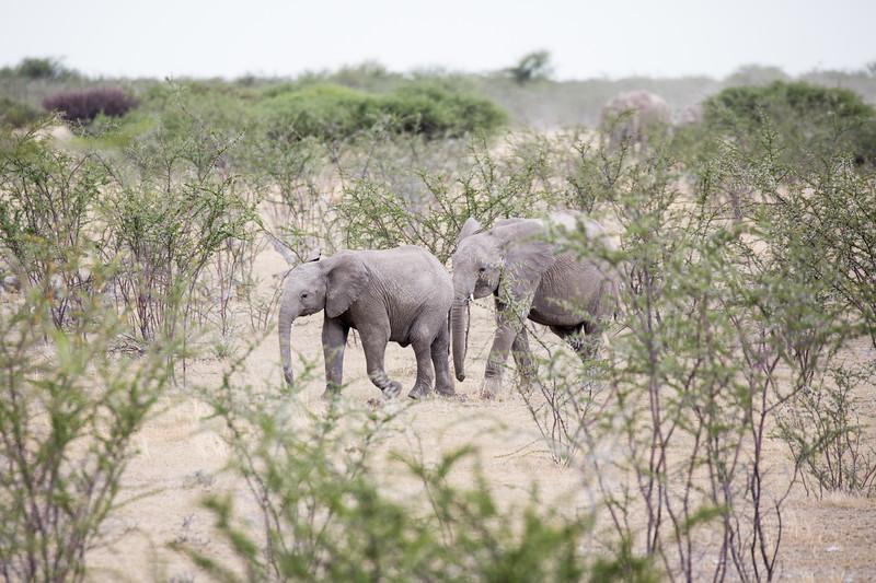 Africa-0916.jpg