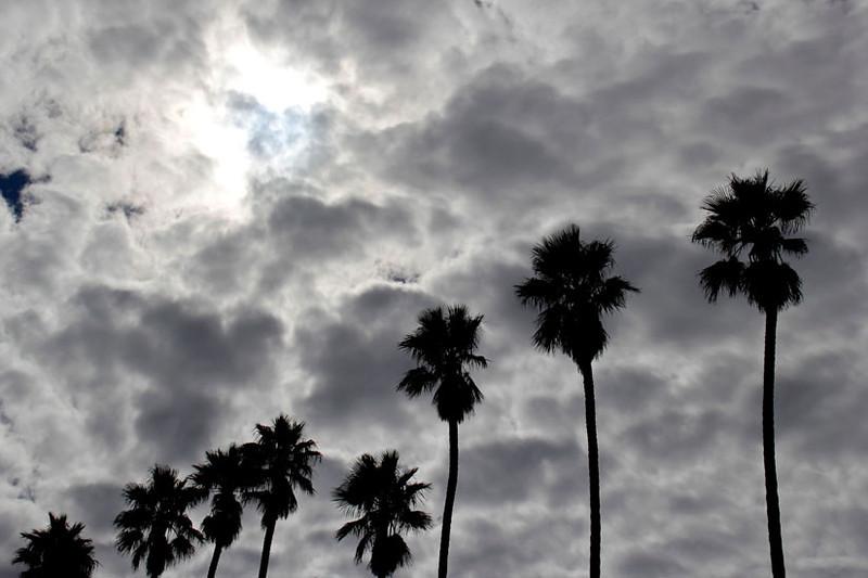Cloudy Palms