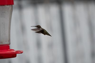 08-09-2019Hummingbirds