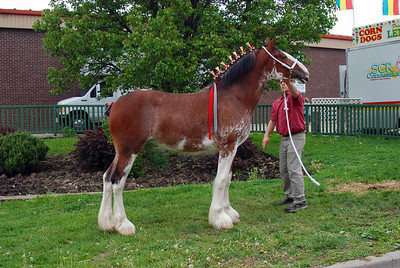 2010 National Clydesdale Sale