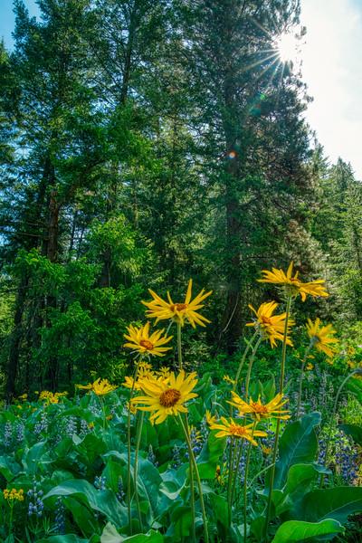 North Cascades Spring 2019-7.jpg