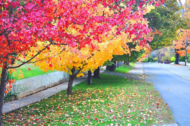 colored leaves 11-18-2011.jpg