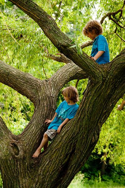 climbing big tree (6 of 6).jpg
