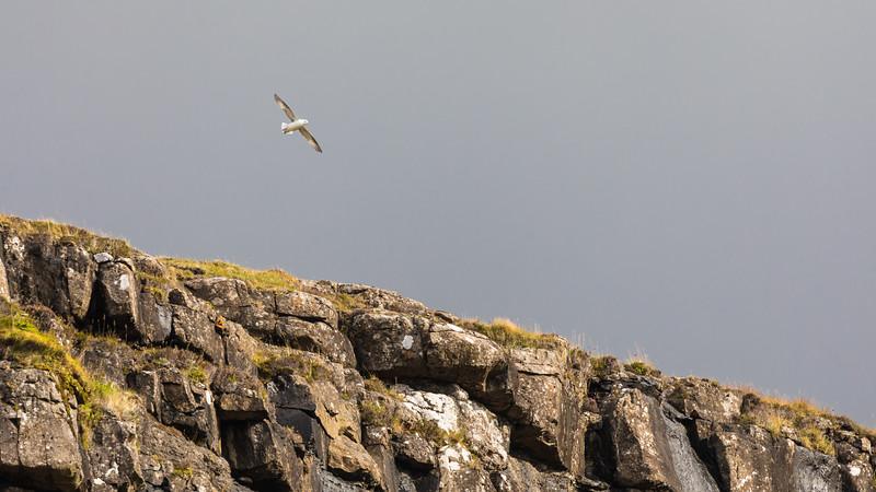 Faroes_5D4-4373.jpg
