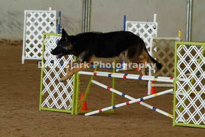 Novice Jumpers 20inch