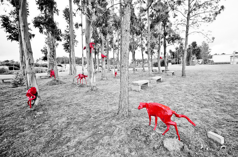red_cats_02.jpg