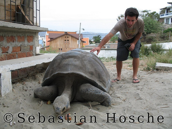 "<html>2006-11-06_11680 <span class=""eng2""><p>Miguelito, the giant turtle </p></span><span class=""ger""><p>Miguelito, die Riesenschildkröte </p></span><span class=""esp""><p>Miguelto, la turtuga gigantesca </p></span></html>"