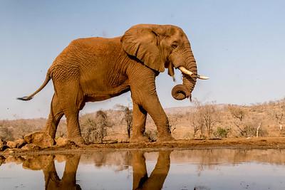 Animals Africa