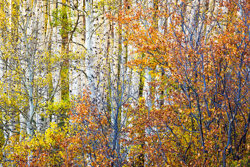 Fall in the Uncopahgre Forest