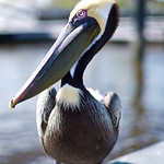 Everglades and Loosescrew