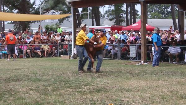 Chincoteague Horses 2012