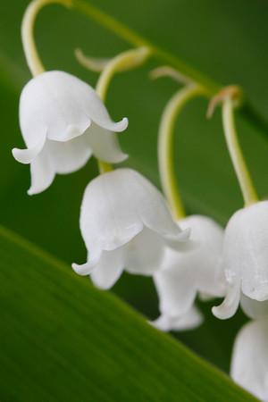 Poetry of Flowers / Поэзия цветов