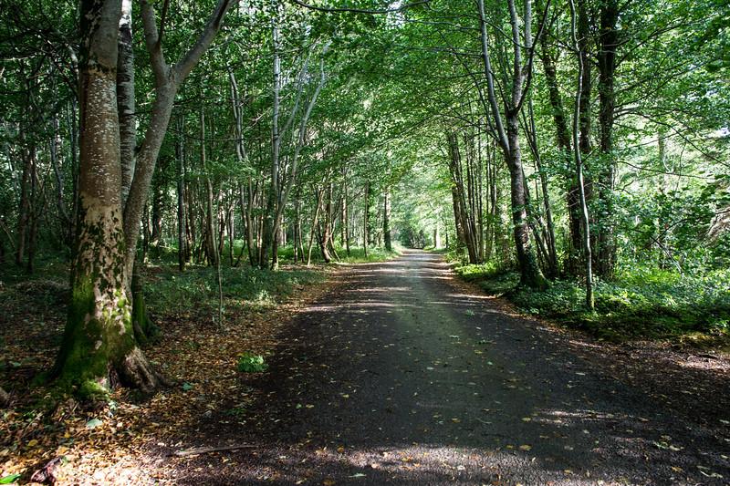 Traffic-free paths in Muckross Path