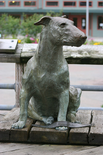 """Patsy Ann - the Juneau """"welcoming"""" dog - she met ships at the dock all her life even tho she was deaf from birth, she always knew when a ship would arrive"""