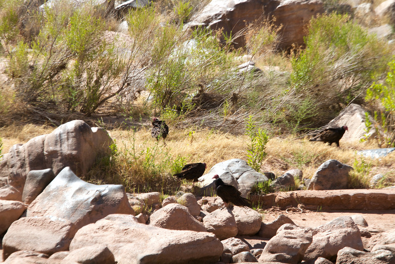 2014_Grand_Canyon_WHDW2_7D 63