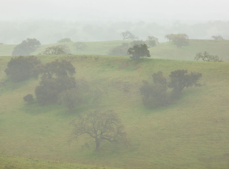Foggy Oaks California Central Coast.jpg