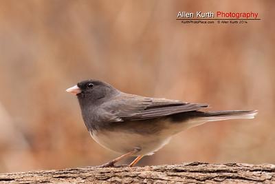 April 6 - Backyard Birds