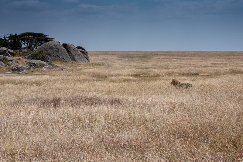 Plains of the Serengeti, Tanzania