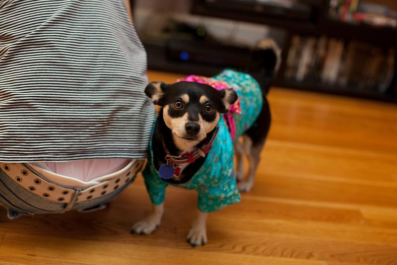 Dog-sushi-halloween-25.jpg