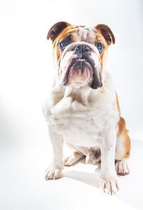 Walter - Animal Clinic Spotlight Pet