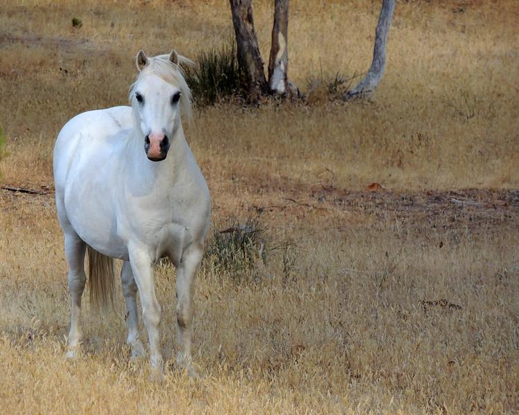 Australia 035 N.jpg