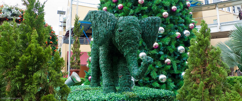 Elephant - The Curve