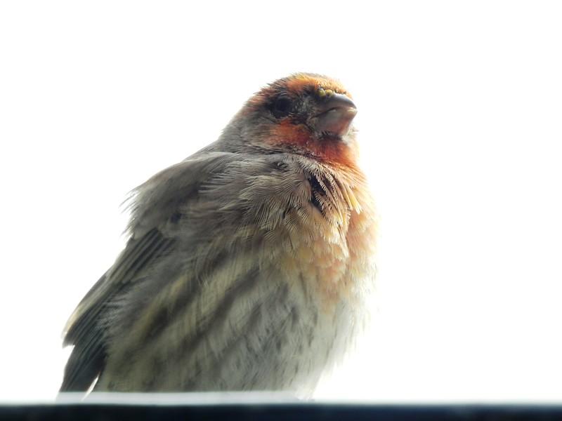 birds (129).JPG