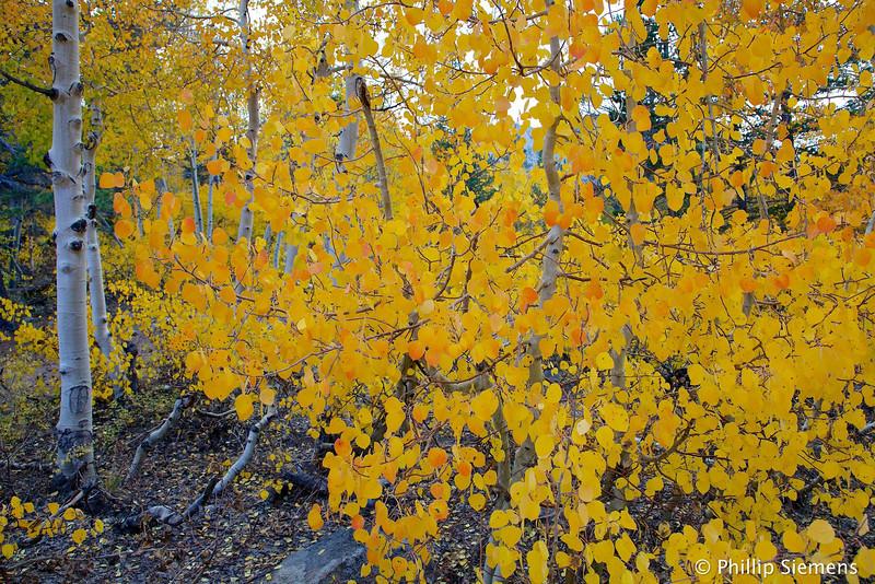 Aspen Grove at North Lake
