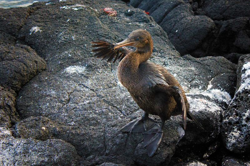20110313-IMG_2501_Marians_Peru_Galapagos-Edit.jpg