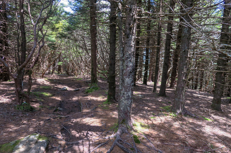 Mountains-to-Sea/Art Loeb Trail -- 5,940'