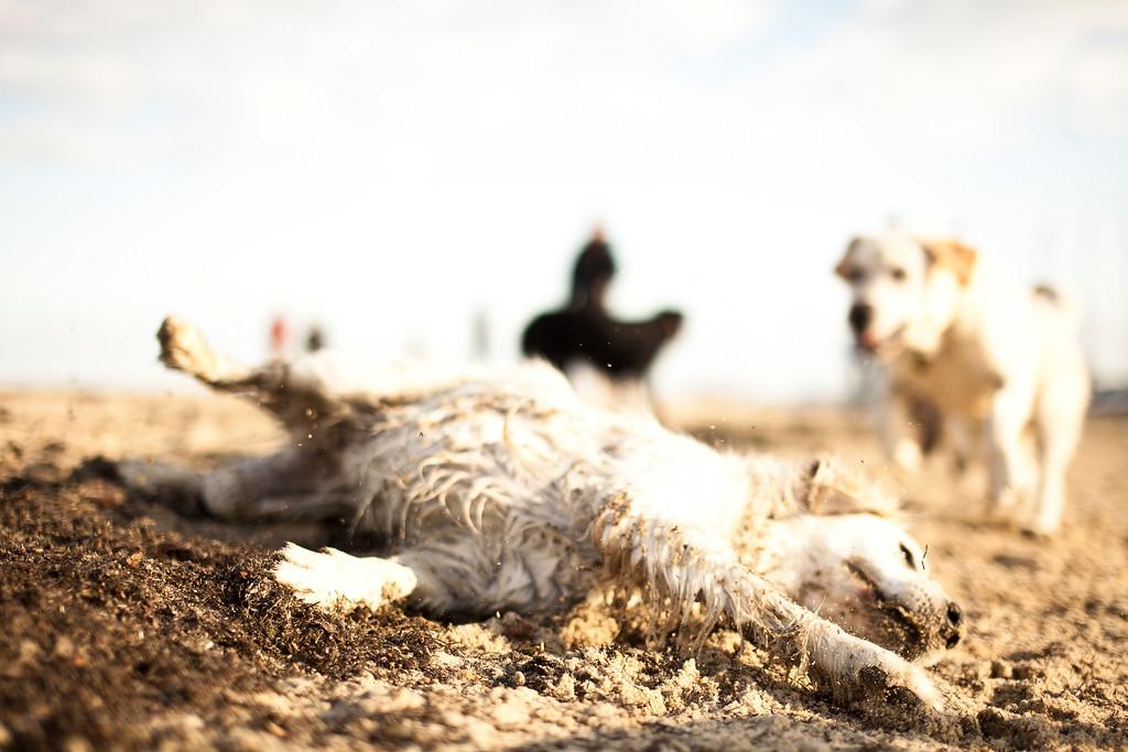 Dogsonbeach-AlexanderGardner-0008-20100614