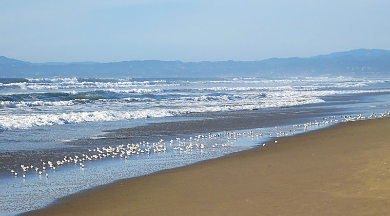 Shorebirds 0151.jpg