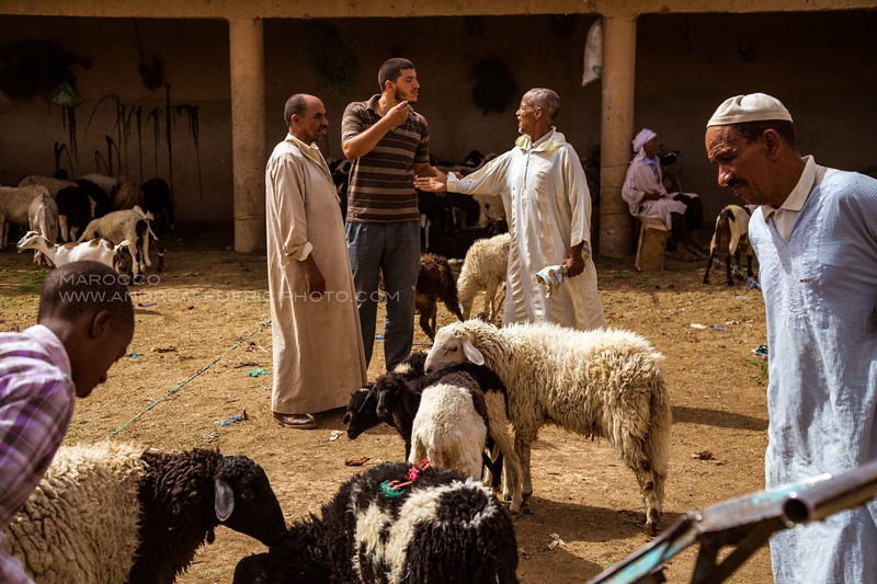 Sheep and Goat Market in Rissani