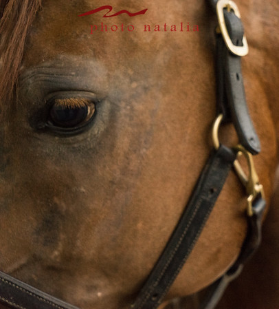 2016 OK Annual Youth Arabian Horse School Competition
