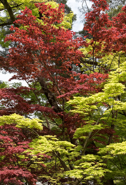 Green and red leaves at Gardens of Nanzen-ji Zen Buddhist temple in Kyoto, Japan
