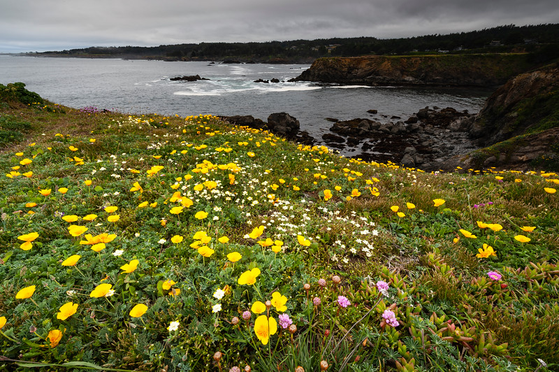 Mendocino Flowers (1 of 1).jpg