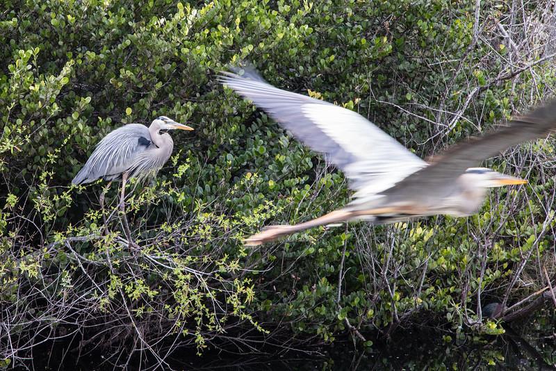 Everglades NP-0373-Select_E.jpg